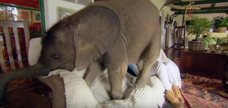 bebe elefante sigue rescatista 3