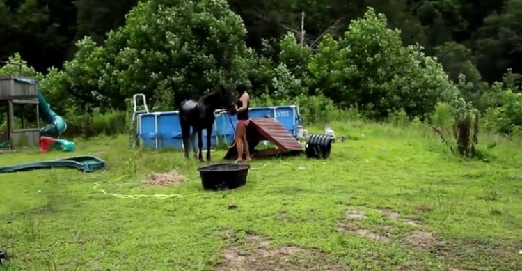 caballo-rescatado-montana11