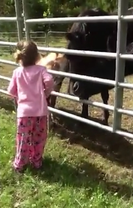 caballo-rescatado-montana12