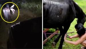 caballo-rescatado-montana14