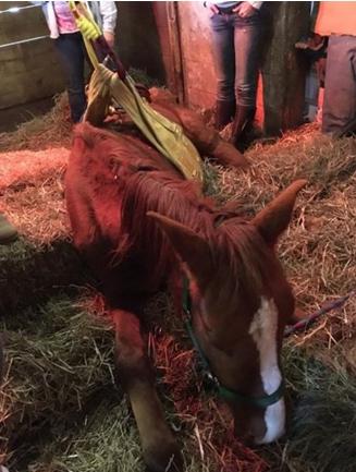 caballos-rescatados4