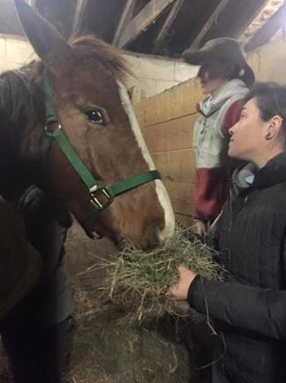 caballos-rescatados7