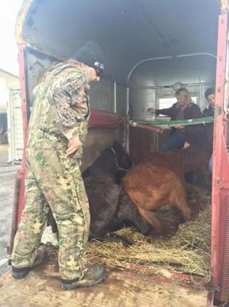 caballos-rescatados8