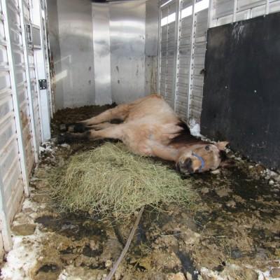 caballos-rescatados9