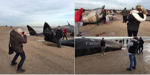 cachalotes muertos 3