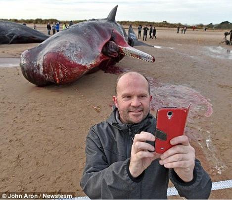 cachalotes muertos 4