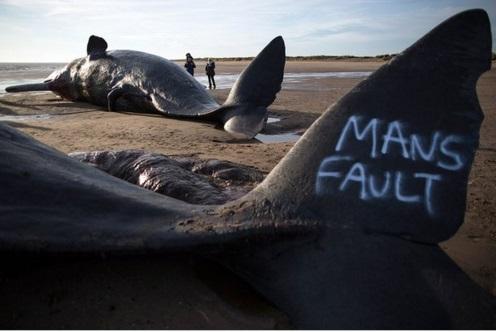 cachalotes muertos 5