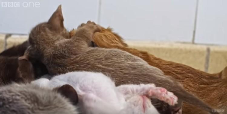cachorro-adoptado-por-gato12