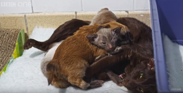 cachorro-adoptado-por-gato15