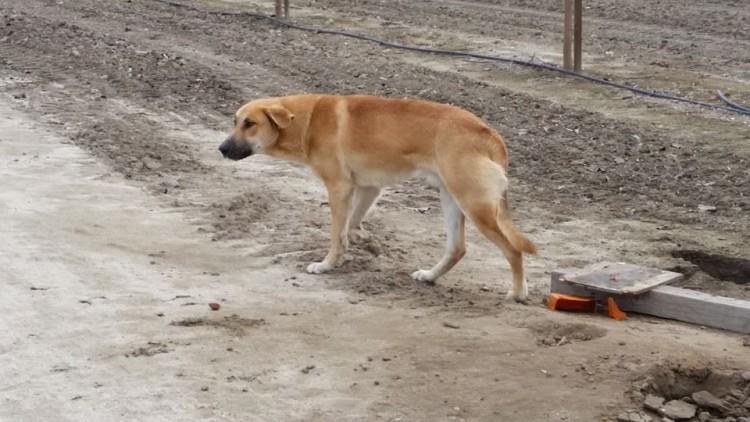 carta-de-quien-rescato-a-su-perro4