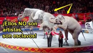 circos-sin-animales4