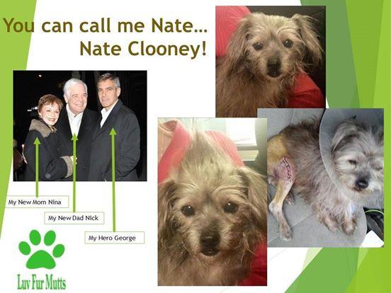 clooney adopta otro perro 4