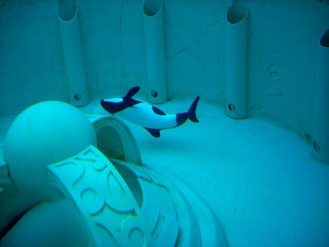 delfin-muere-seaworld1