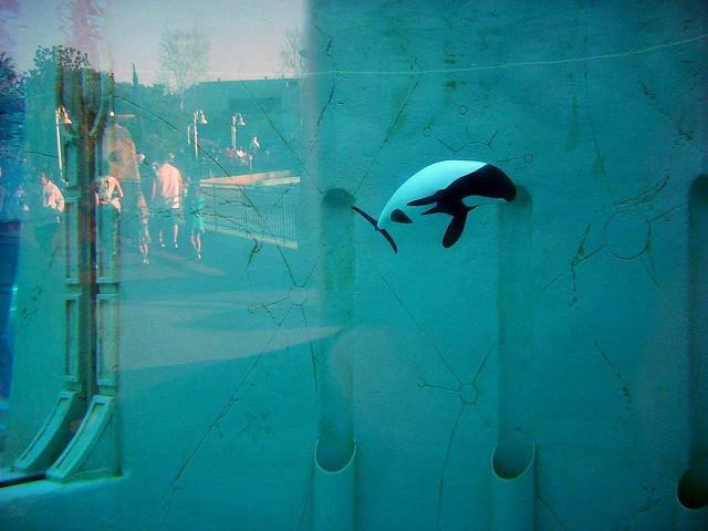 delfin-muere-seaworld2