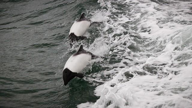 delfin-muere-seaworld4