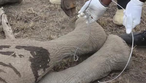elefante-bebe-rescatado3