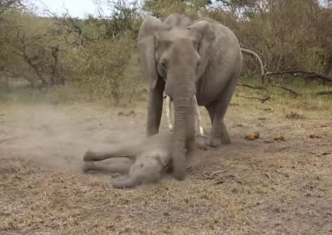 elefante-bebe-rescatado5