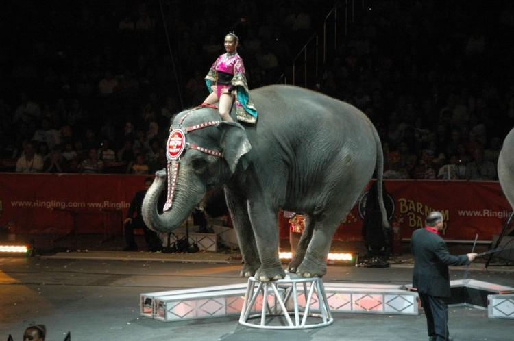 elefante-muere-en-circo1
