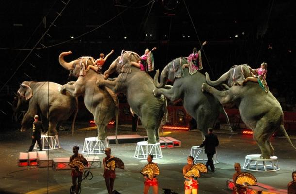 elefante-muere-en-circo3