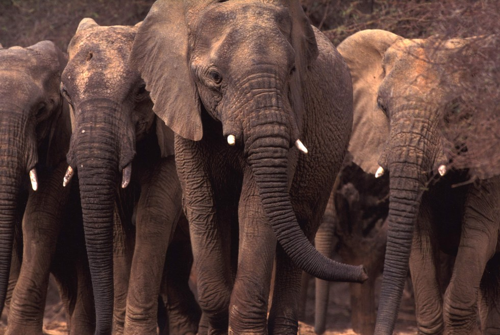 elefantes malis 1