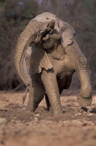 elefantes malis 2