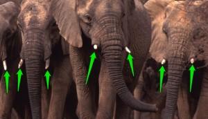 elefantes malis 5