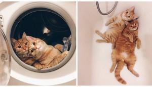 fotos-de-gatos-inseparables