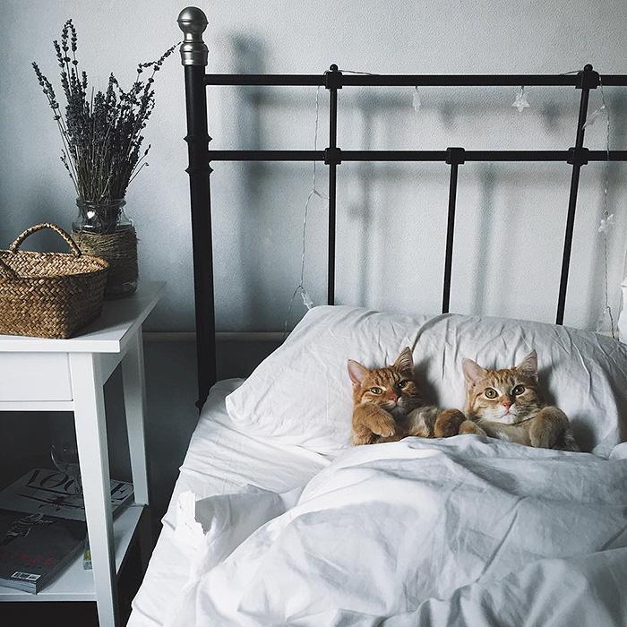gatitos rojos 10