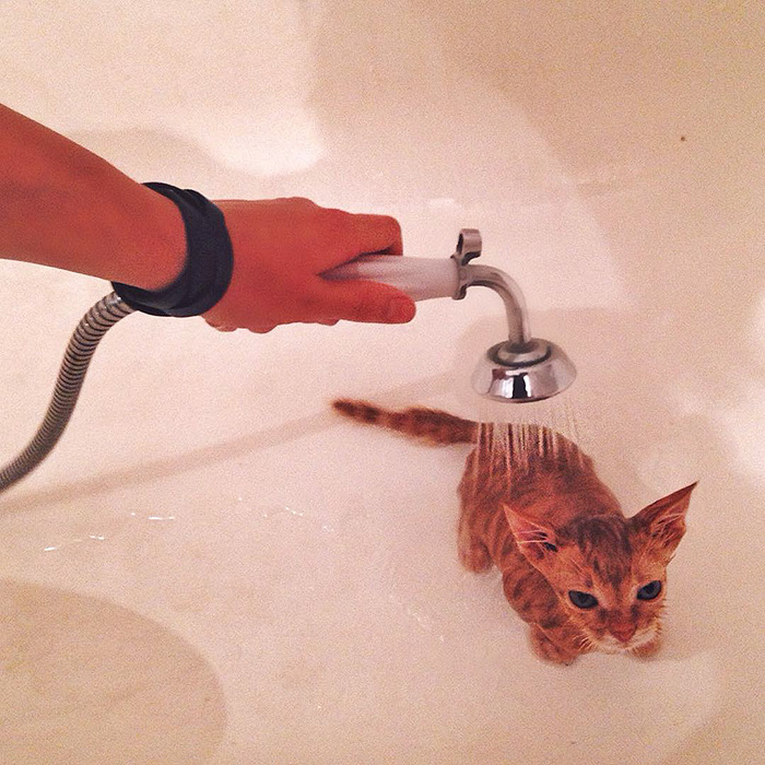 gatitos rojos 11