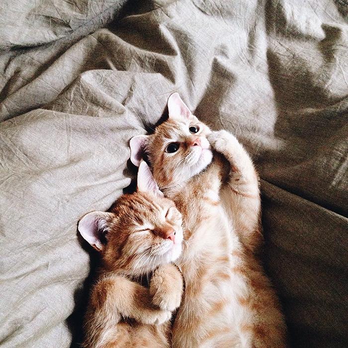 gatitos rojos 13