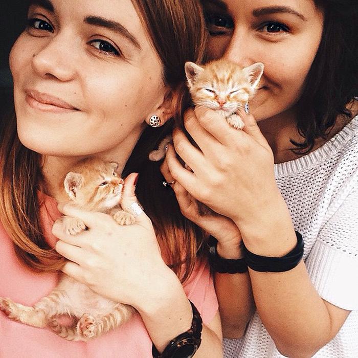 gatitos rojos 14