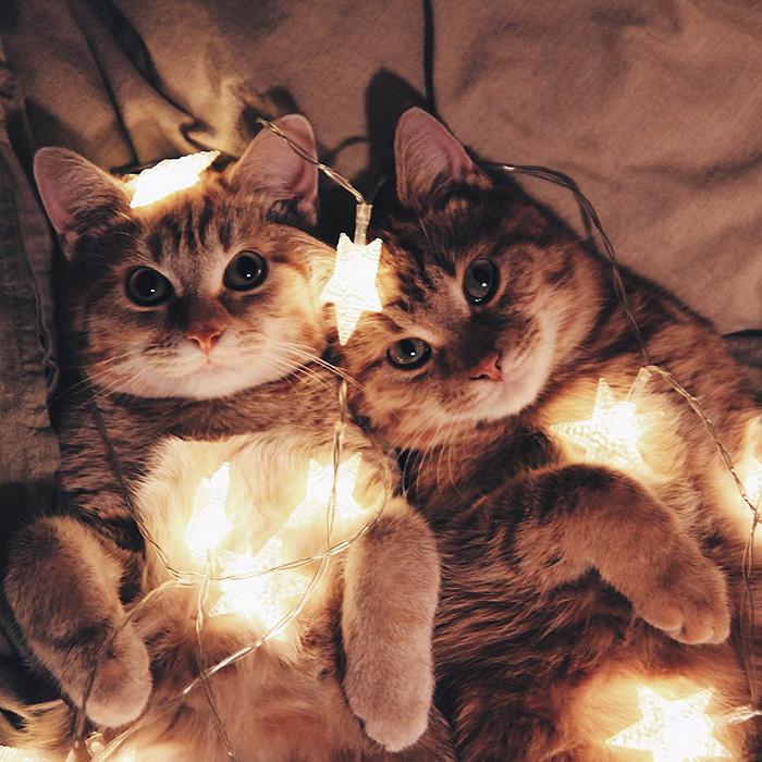 gatitos rojos 15