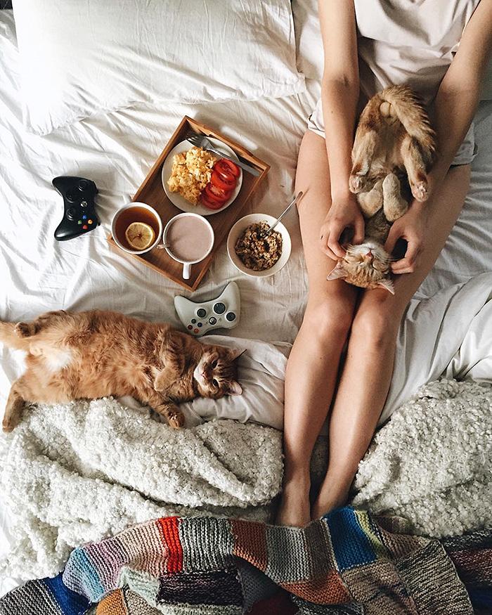 gatitos rojos 17