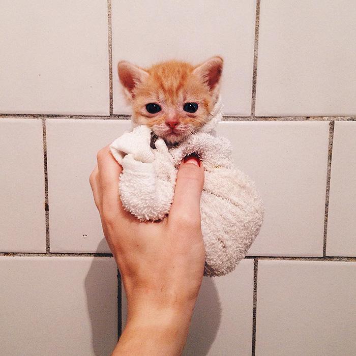 gatitos rojos 2