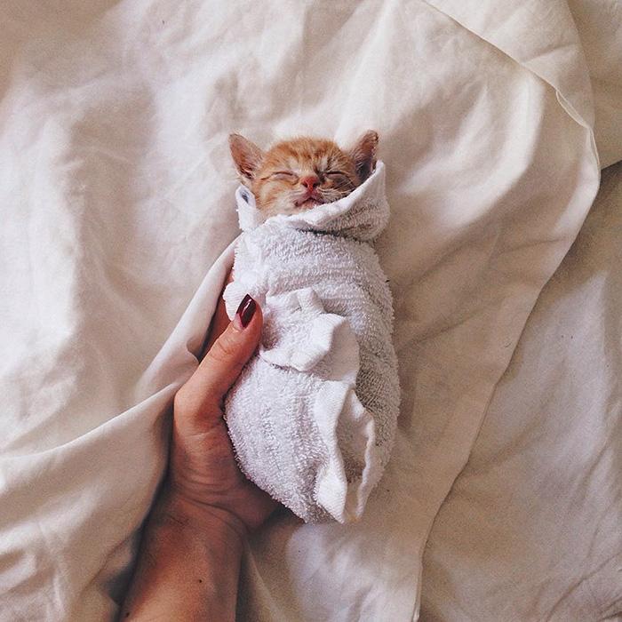 gatitos rojos 4
