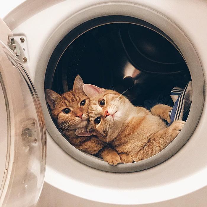 gatitos rojos 5