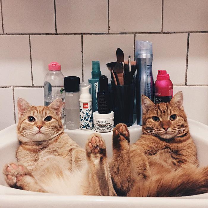 gatitos rojos 8