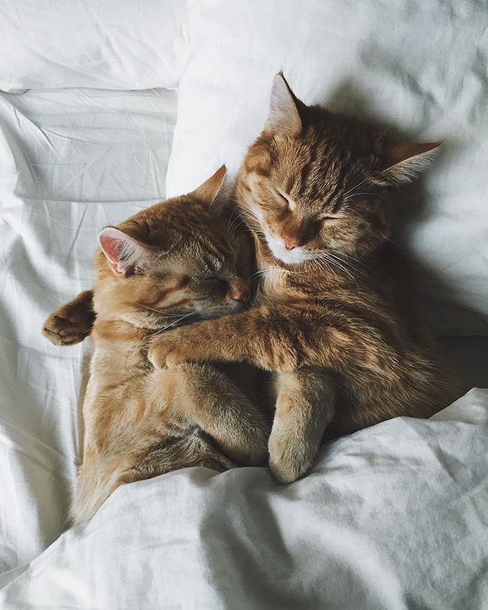 gatitos rojos 9