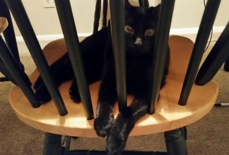 gato terapia 4