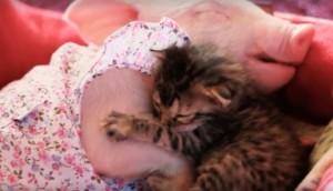 gato-y-cerdita-rescatados7 - copia