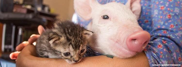 gato-y-cerdita-rescatados9
