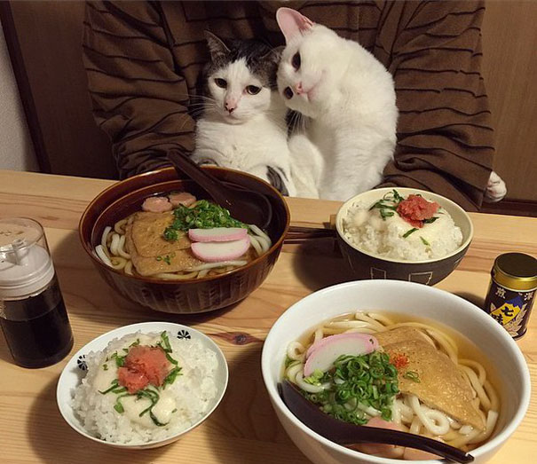 gatos-san-valentin10