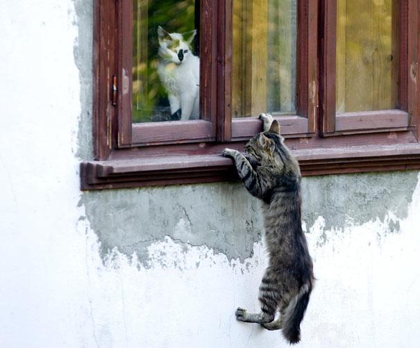 gatos-san-valentin12