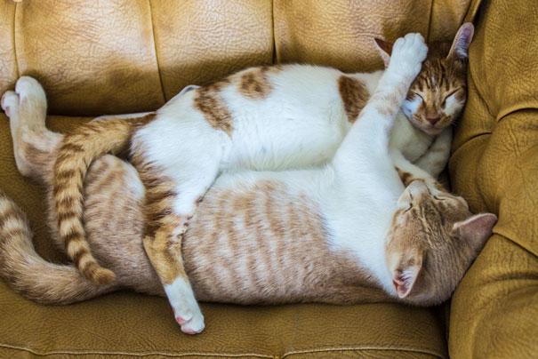 gatos-san-valentin14