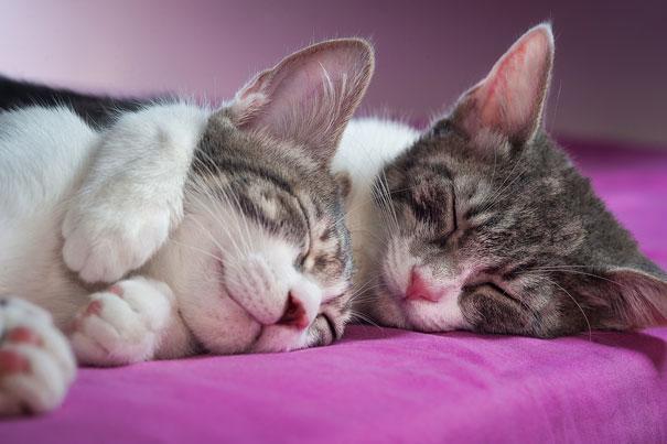 gatos-san-valentin16
