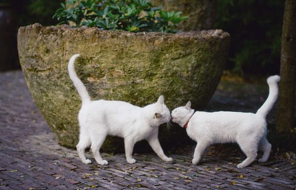 gatos-san-valentin18