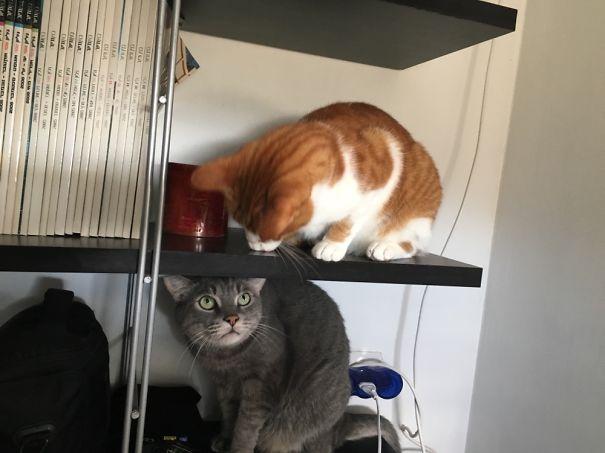 gatos-san-valentin20
