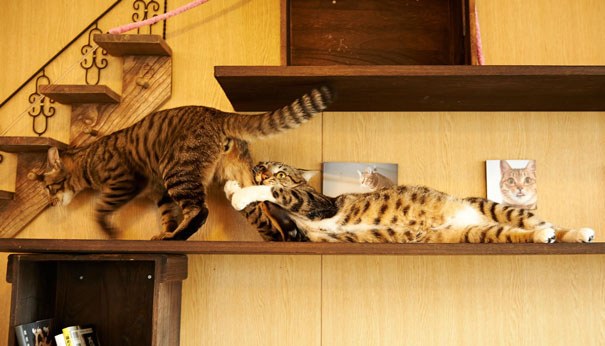 gatos-san-valentin8
