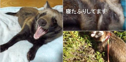 gorro de mapache 3