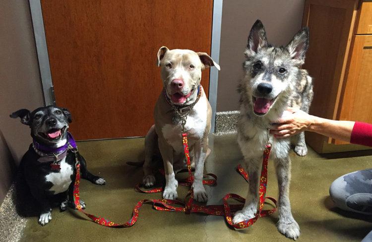 julia-rescatada-otros-perros
